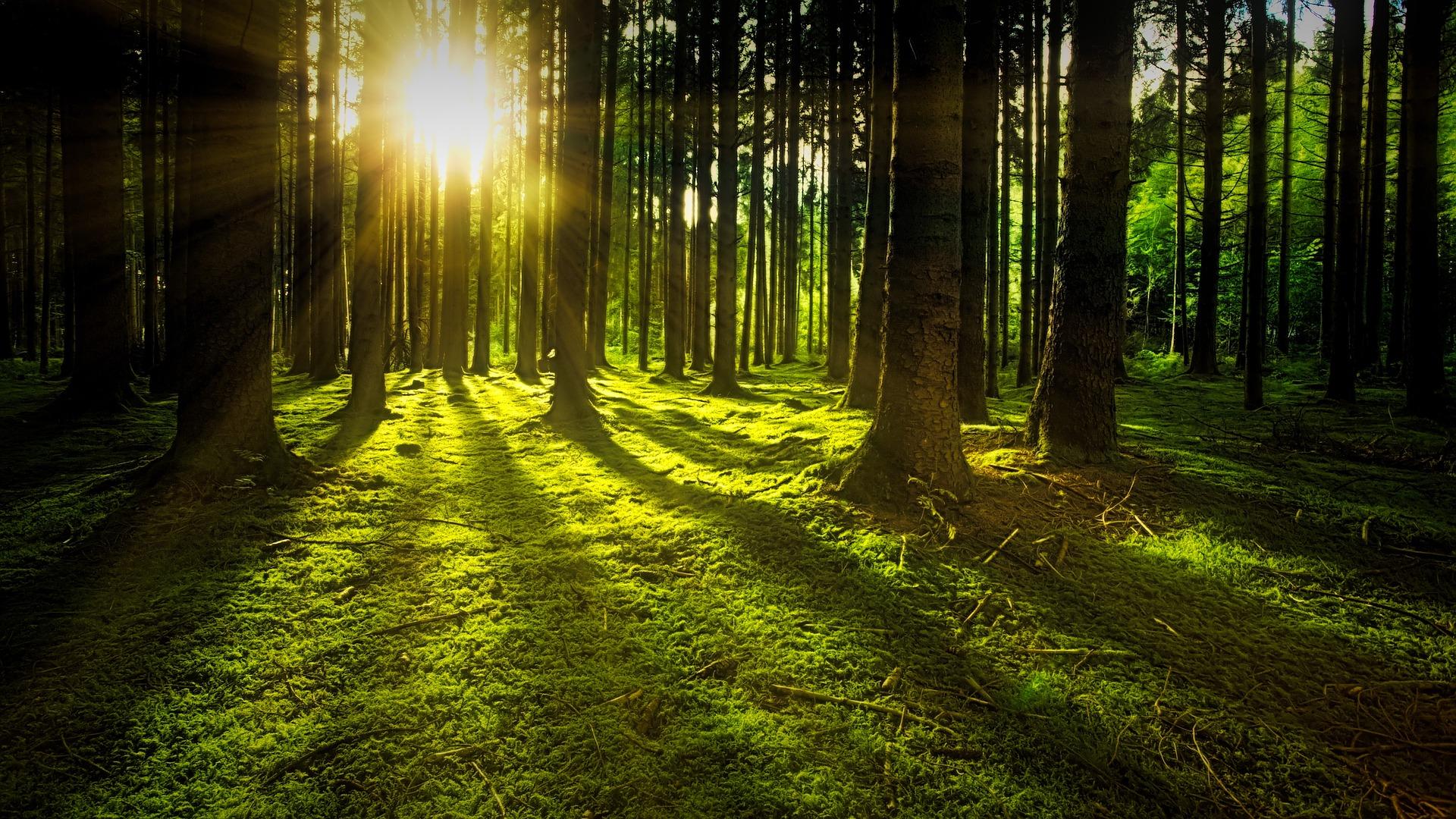 Baumschutz – in Ingolstadt verbesserungswürdig